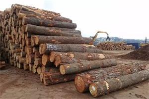 剖析木材价格上涨及策略