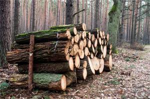生态板的环保与好坏要这样去判定